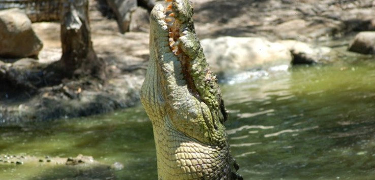 Spartacus, Hartley's Croc Adventures