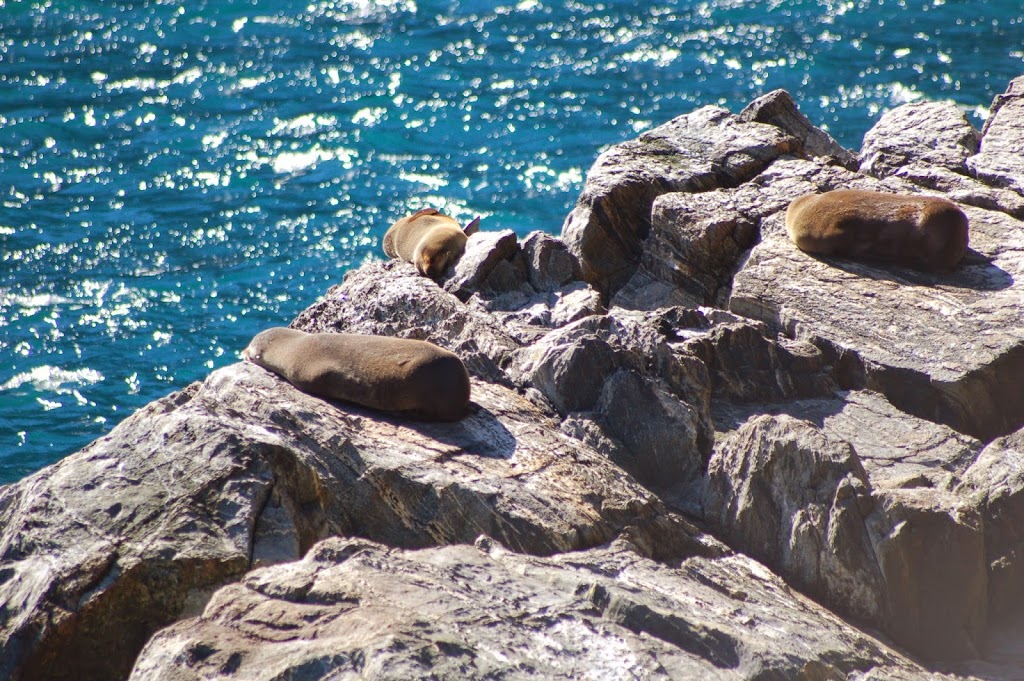 Seals at Milford Sound - New Zealand - Itinerary Planner