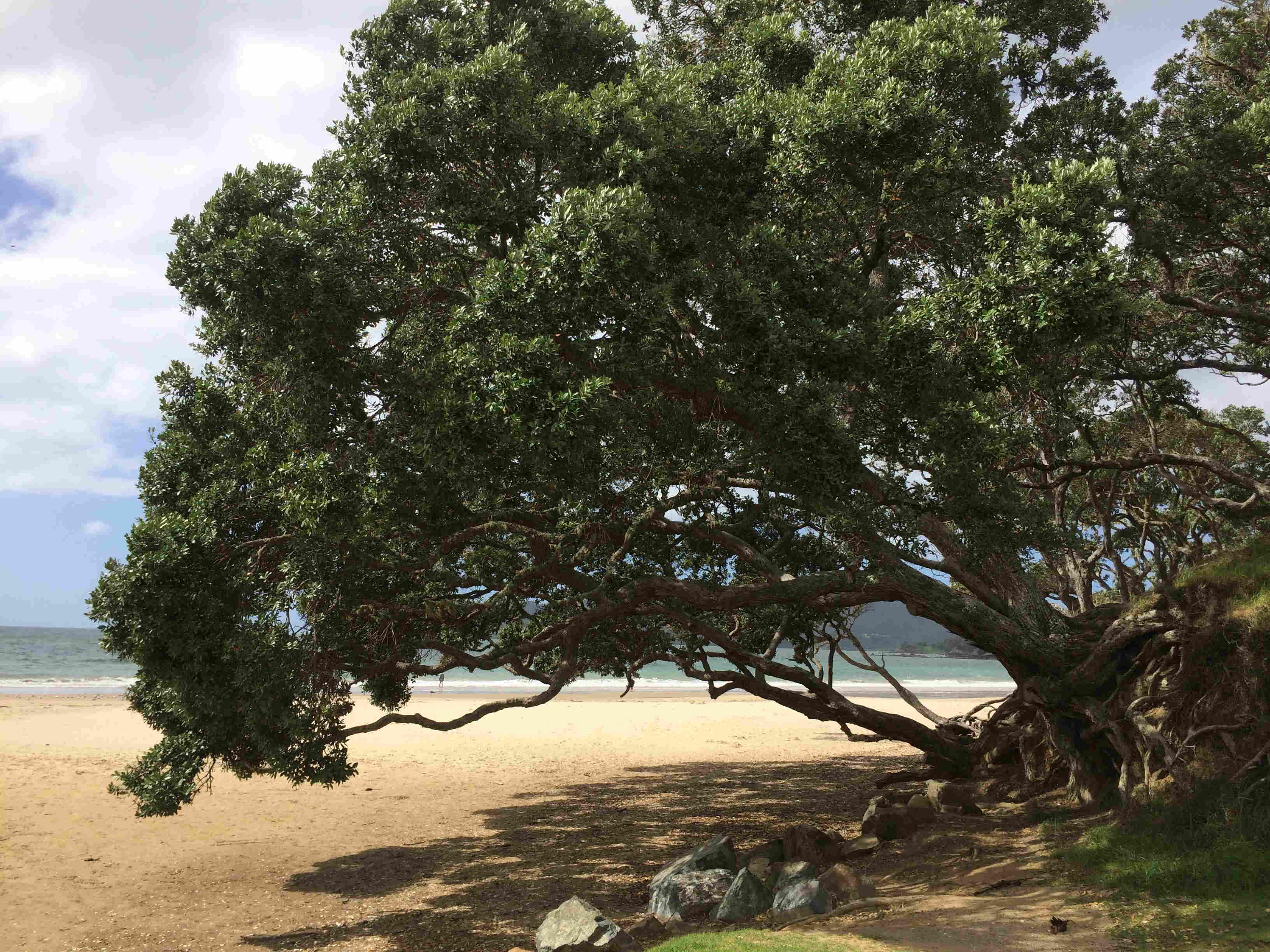 Cooper Beach - Itinerary Planner